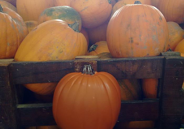 abobora-halloween